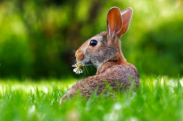 Wildhase im Gras